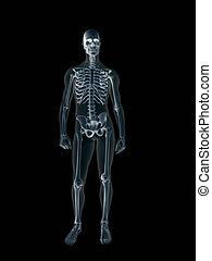 rentgen, body., xray, lidský, mužský