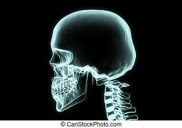 rentgen, bránit i kdy, hrdlo