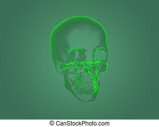 rentgen, hlavička, anatomie