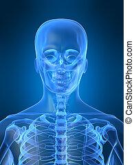 rentgen, hlavička