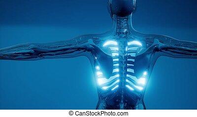 rentgenologia, egzamin, ludzki, płuca