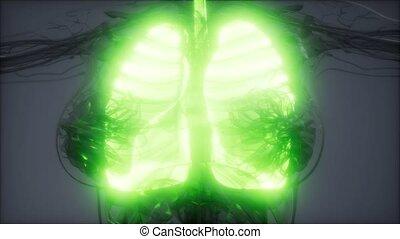 rentgenologia, ludzki, płuca, egzamin