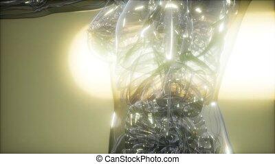 rentgenowski, ludzkie ciało, wizerunek