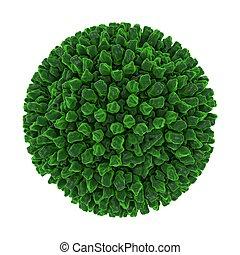 Reovirus isolated on white background