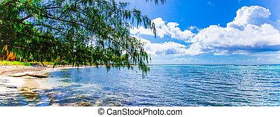 república, caribe, palma, dominicano, cielo, océano, costa