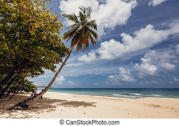república, playa, dominicano, océano