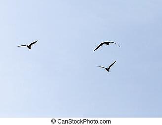repülés, Ég, madár