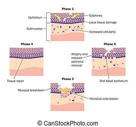 reparera, faserna, epithelial