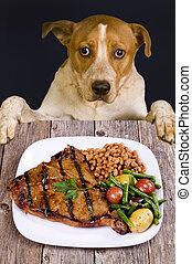 repas., bon, chiens