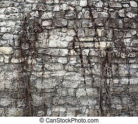 repkény, képben látható, ősi, fal