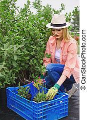Replanting floral seedlings