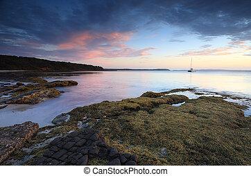 repolho, árvore, praia, austrália