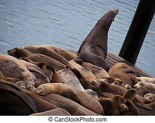 reposer, 39, bois, plateformes, lions, mer, marina,...