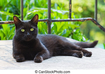 reposer, chat noir