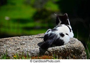 reposer, chat