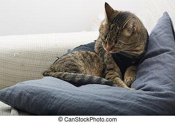 reposer, chat, sofa