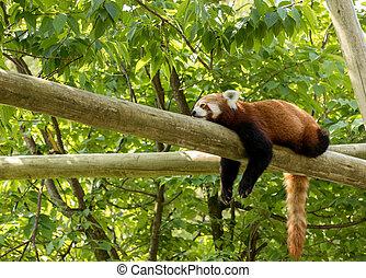 reposer, déprimé, ours, regarder, arrière-plan., vert, tired., bûche, panda, rouges, forêt