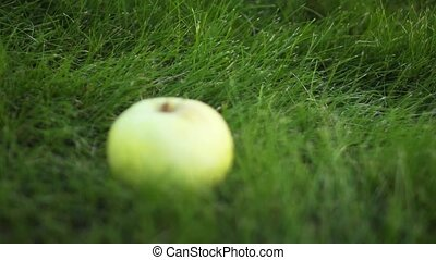 reposer, foyer, herbe, vert, déplacement, solitaire, pomme