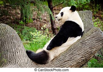 reposer, géant, bûche, panda