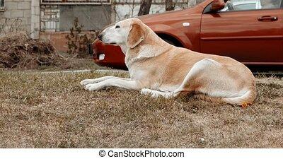 reposer, métrage, chien, poche, sdf, bord route