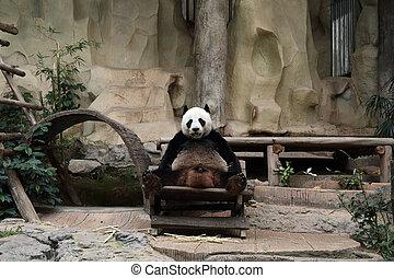 reposer, ours panda