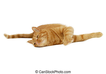 reposer, rouges, chat