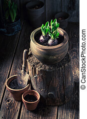 Repotting green plants in an old wooden workshop