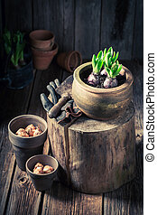 Repotting green plants in the rustic cottage