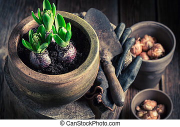 Repotting green spring flowers on wooden stump