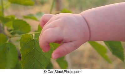 Human and nature. Kid's arm touching tree. Closeup, slow motion