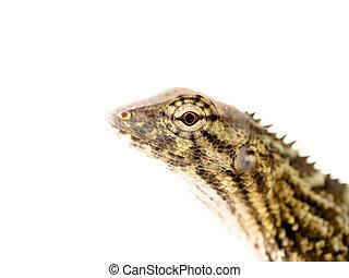 reptil, augenpaar, ende, groß, klein