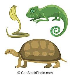 Reptile and amphibian colorful fauna vector illustration reptiloid predator reptiles animals.