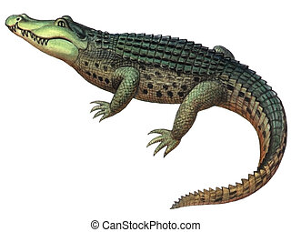 Reptile Crocodile - Colored drawing on the paper reptile...