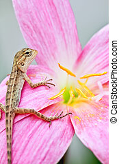 reptile on flower