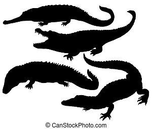 reptile, silhouette