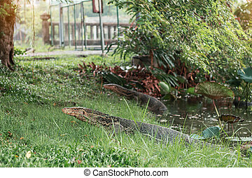 reptile that lives in a pond.