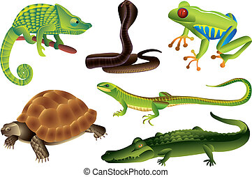 reptiles and amphibians set - reptiles and amphibians photo...