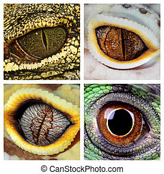 reptiles eyes - a collage of the eyes of four different...