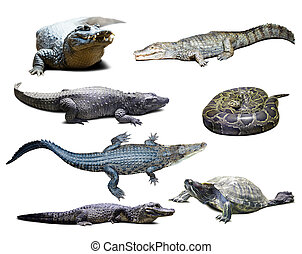 reptiles over white with shade - Set of reptiles over white...