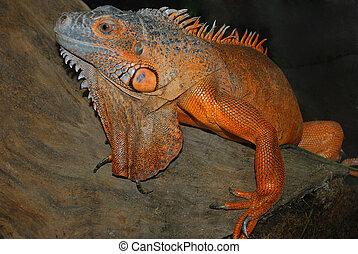 Reptiles - Orange lizard sitting on a tree