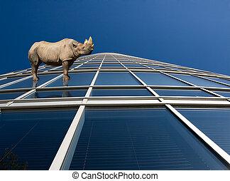 reputacja, okna, drapacz chmur, nosorożec