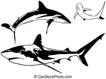 requin, ensemble, antilles, récif
