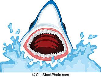 requin, fâché