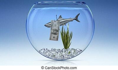 requin, financier