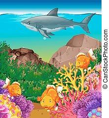 requin, fish, mer, natation