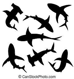 requin, vecteur, silhouettes