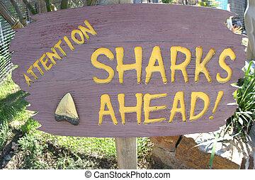 requins, ahead!