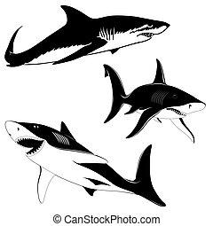requins, ensemble, trois