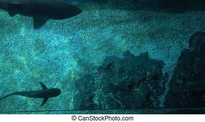 requins, vue dessus