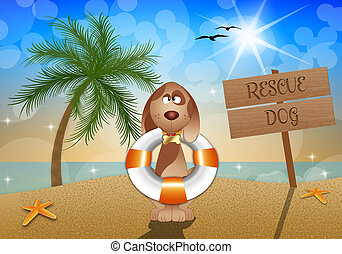 Rescue dog on the beach